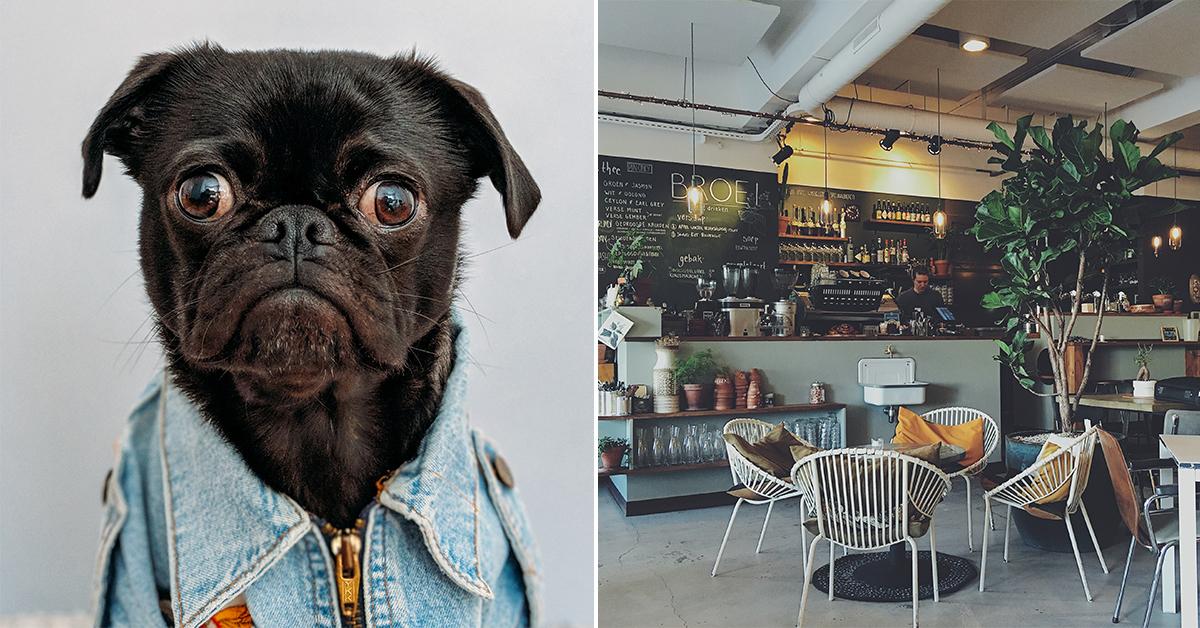hundvänliga restauranger kungsholmen