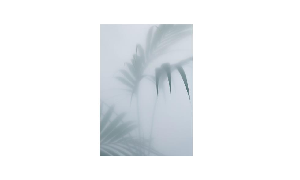 Poster med palm