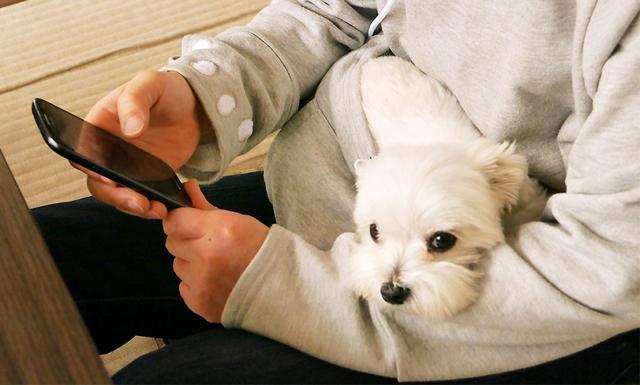 Svenskarnas husdjur bestämmer hemma – och får även sova i sängen