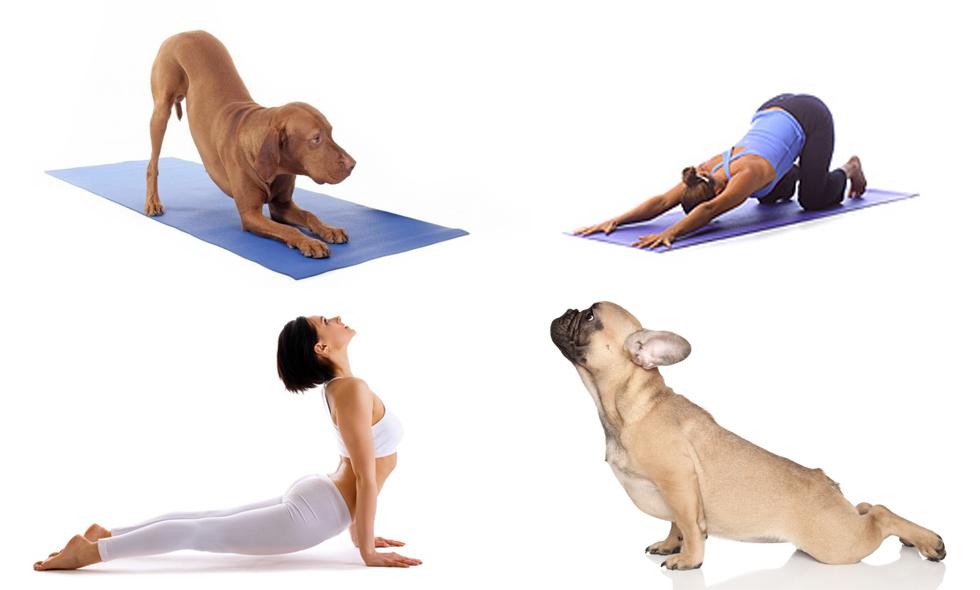 15 djur som får yoga att se både gulligt och lätt ut