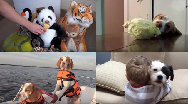 Fem hundklipp som kommer göra din dag bättre