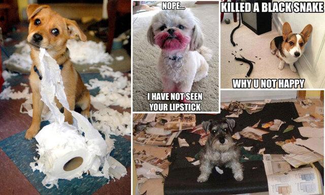 11 hundar som har roat sig på egen hand när husse har varit på jobbet