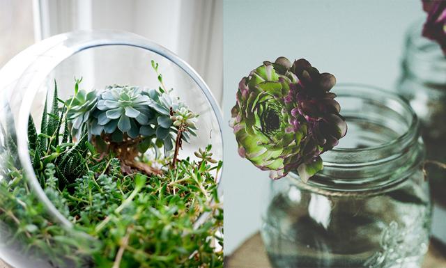5 växter du ska ha i sovrummet för att sova bättre