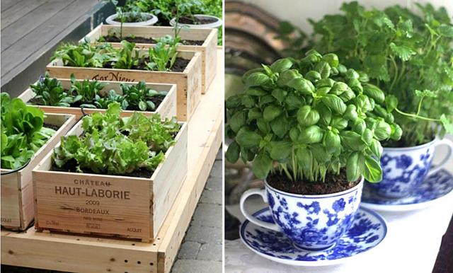 Så odlar du inne i stan – 6 enkla och smarta tips