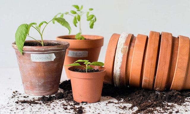 Veckans gröna: Så enkelt skapar du en trädgård hemma