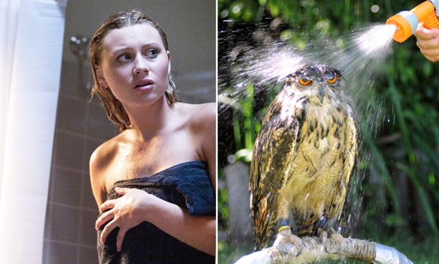 Forskare: Därför ska du bara duscha 1 till MAX 2 gånger i veckan