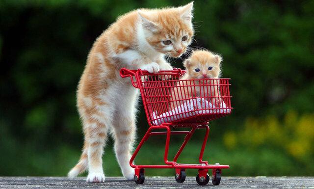 Forskare: Därför borde du titta på fler kattklipp