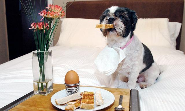 23 hundvänliga restauranger i Stockholm