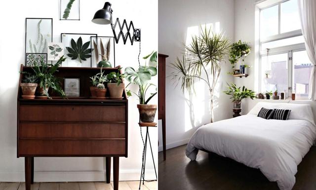 19 sätt att förvandla ditt hem på – med växter