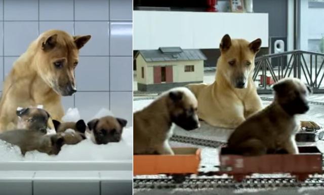 Reklamfilmen med hundpappan och hans valpar är det sötaste vi sett