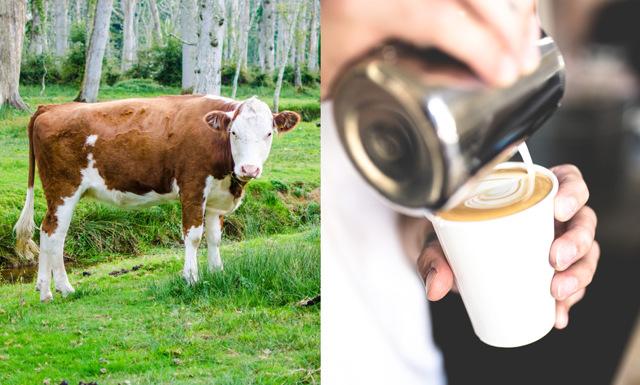 Framtidens mjölk kräver inga kor – här är den avgörande ingrediensen