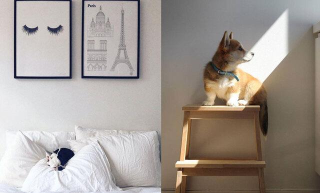 5 gulliga hundar du borde följa på Instagram