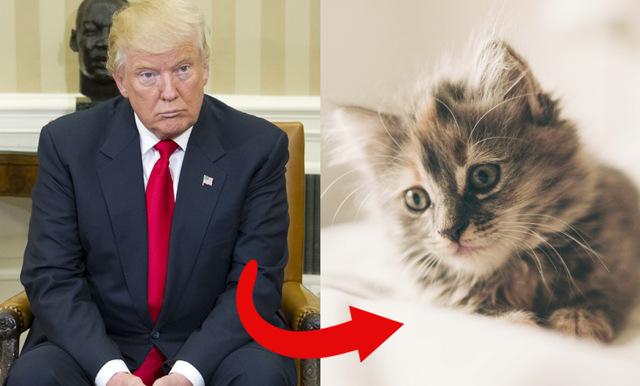 Kolla in nya funktionen som byter ut Trump mot kattungar