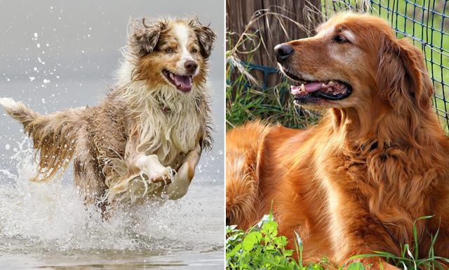 Ditt stjärntecken avslöjar vilken hundras du passar bäst ihop med