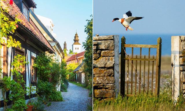 Nu kan du och din partner byta storstan mot boende på Gotland – helt gratis!