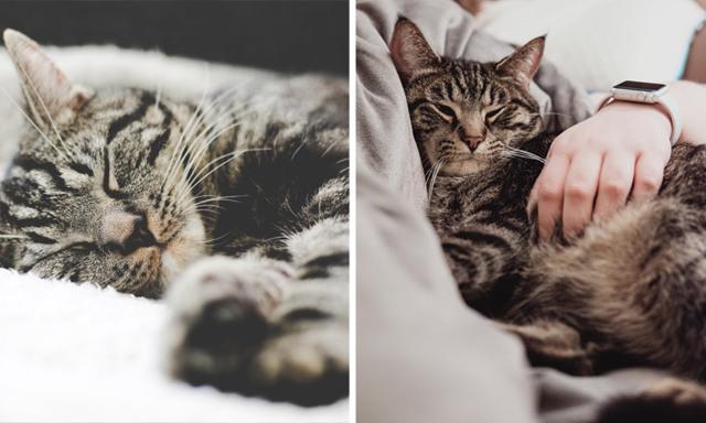 Drömmen! Nu kan du jobba som professionell kattgosare