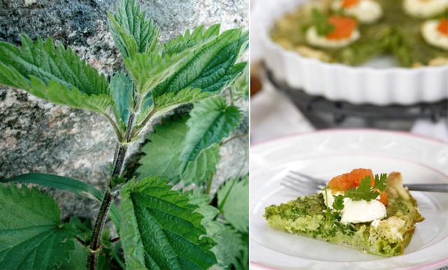Ätbart ogräs och vilda växter - 8 gröna tips att plocka till middagen