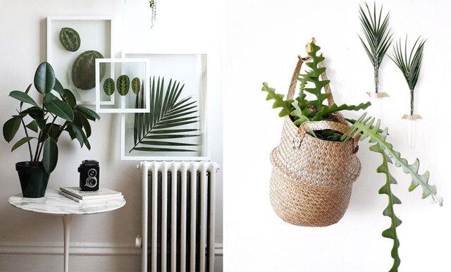 8 trendiga växter som är inredarnas stora favoriter