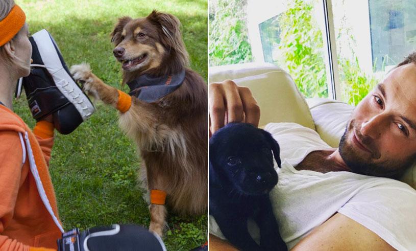 10 kändisar och deras hundar – bilderna som får oss att aldrig sluta följa dem på Instagram