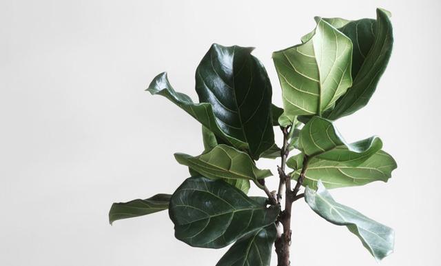 5 Feng shui-växter som ger ditt hem harmoni och balans
