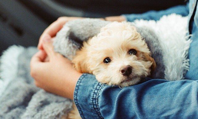 Nu kan du ta ut sjukdagar för vård av husdjur – om du bor i Italien