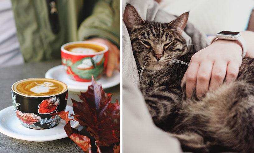katt-cafe-kattcafe