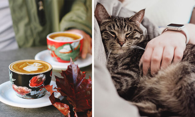Grattis alla kattälskare – snart öppnar Sveriges första katt-kafé