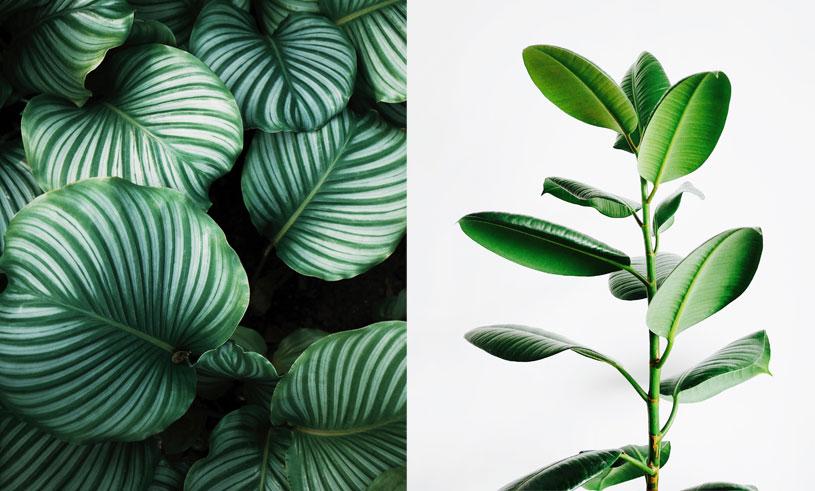 8 snygga och trendiga växter som livar upp ditt hem i höstmörkret