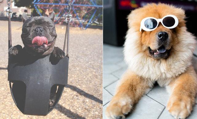 Hund eller andra människor? Studier visar att vi väljer hunden!