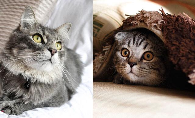 Här är staden som anordnar en kattfestival i sommar – vi bokar biljetten redan!