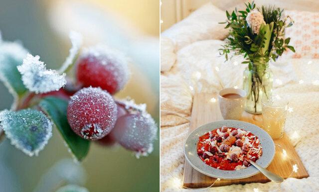 Vårt svenska superbär lingon är nyttigare än açai – här är recepten du måste testa!