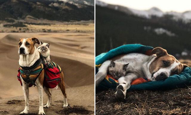 Här är hunden och katten som är bästa vänner – lever äventyrligt drömliv ihop