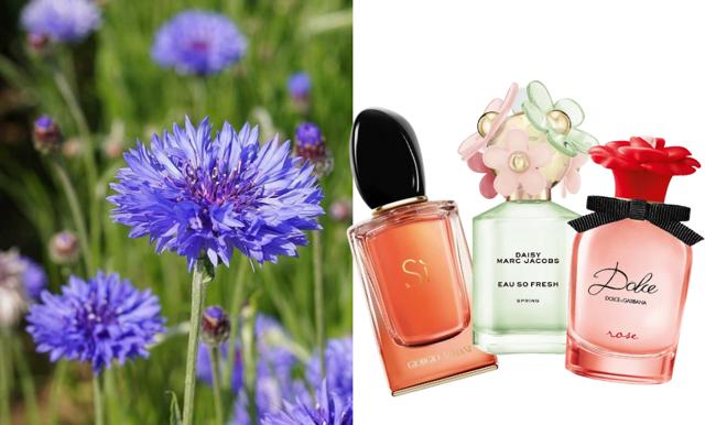 Så väljer du rätt doft för dig – vi listar vårens parfymer