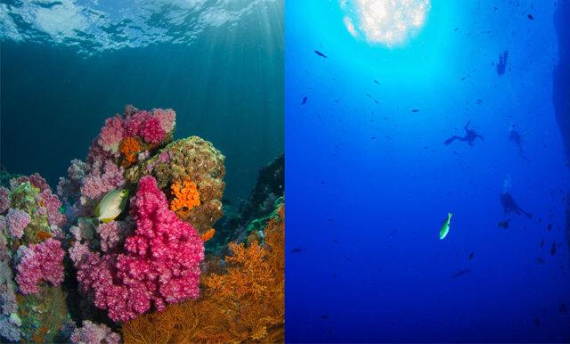 Dyka bland hajar och barriärrev? 8 ställen du inte får missa under havsytan!