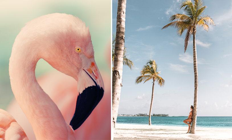 flamingos-bahamas