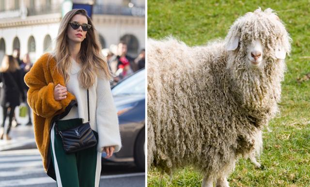 Nu förbjuder några av världens största modejättar mohair – efter djurplågeriet på gårdarna
