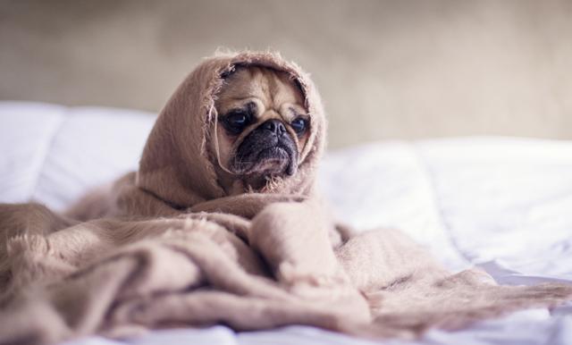 Dagens bästa nyhet! Nu kan du ta ut föräldraledighet för din hund och katt