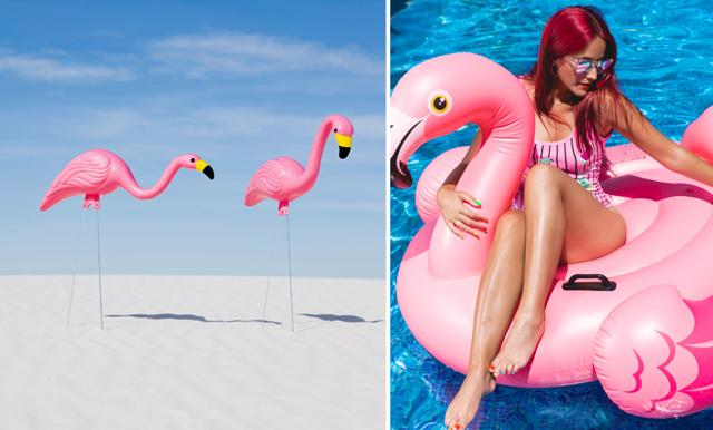 Har du en flamingo hemma? Det kan betyda något helt annat än vad du tror!