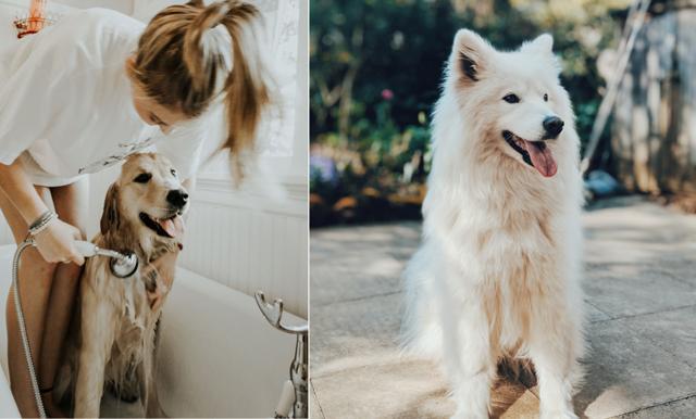 Forskning visar att hundägare lever längre och friskare liv