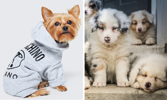 Moschino gör supergullig hundkollektion tillsammans med H&M