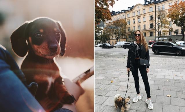 Forskare: Att ha hunden på jobbet får oss att må bättre!