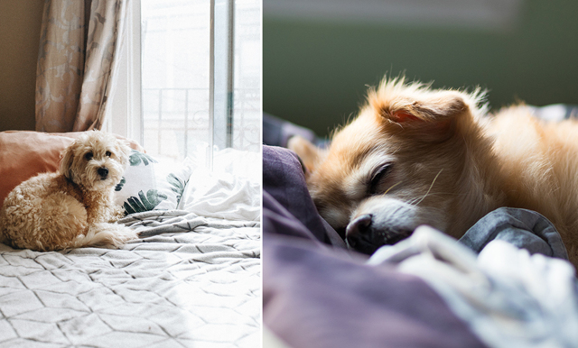 Studie visar: Kvinnor får bättre sömn av att sova med hunden