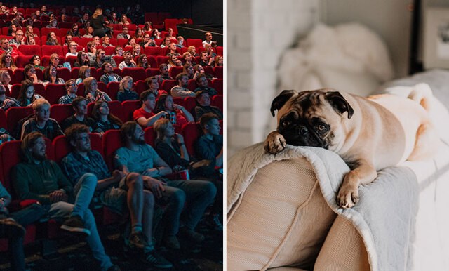Nu finns en biograf där du och din hund kan gå på bio tillsammans!