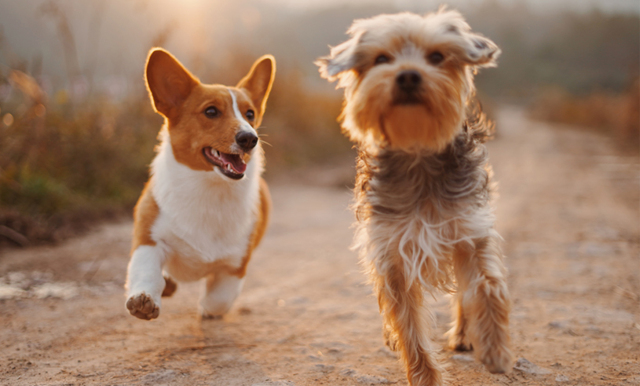 7 anledningar till varför man bör få ha hund på jobbet