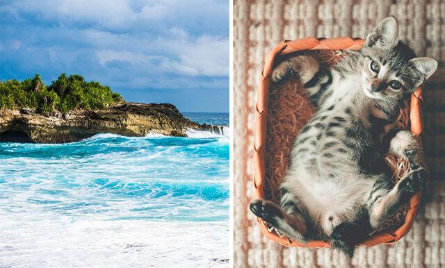 Drömresemålet - paradisön där du kan leka och mysa med 600 katter