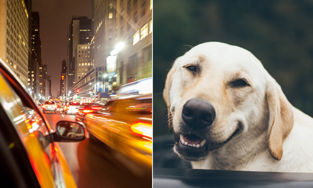 Kundvagn och tand – 10 konstigaste föremålen som glömts kvar i en Uber
