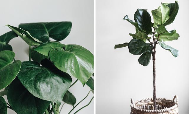 Åk bort utan dåligt samvete – 7 tips som får dina växter att överleva semestern