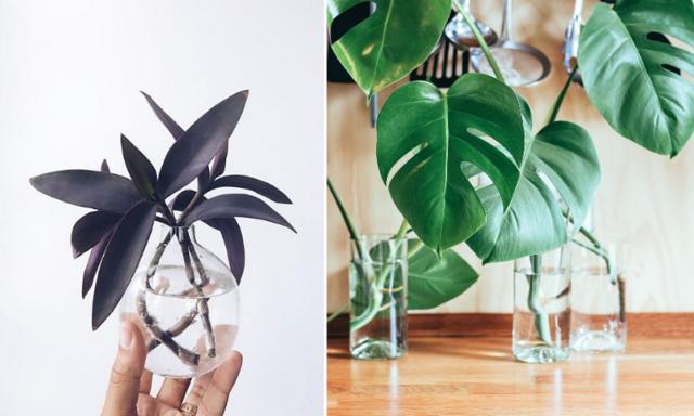 Stor sticklingsguide! Allt du behöver veta för att skapa kopior av dina favoritväxter