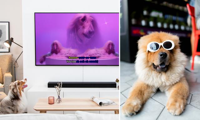 Helgen är räddad! Nu kan du sjunga karaoke – med din hund