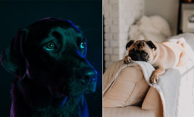 8 tips som håller din skotträdda hund lugn och trygg under nyår